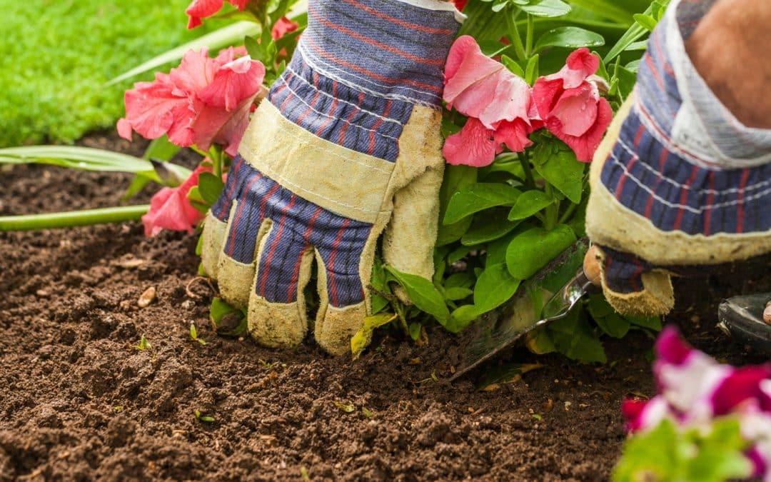 5 Effective Gardening Tips for Beginners