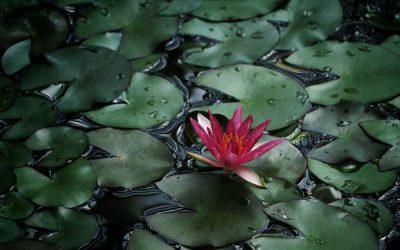How to Create a Backyard Water Garden